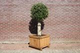 hardhouten bak 60x60x50cm